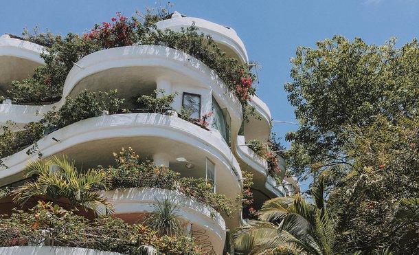 Rośliny Balkonowe Zwisające Całoroczne Które Wybrać