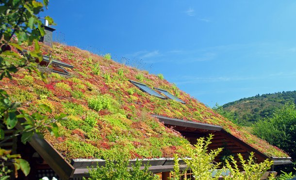 Zielony Dach Konstrukcja Jak Zrobić Building Companion
